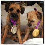 Andy Murray Olympic Dogs